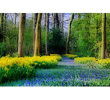 Happy Spring Photographic Print