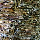 Bunya Pine Bark by Lisa Frost