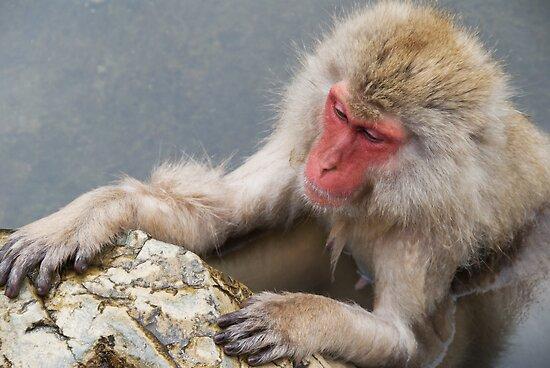 Monkey Onsen by Skye Hohmann