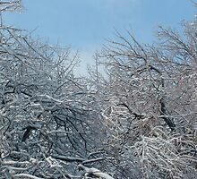 Ice Storm in Louisville 3 by qb4b88