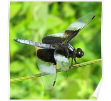 Widow Skimmer Dragonfly Poster