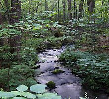 Quiet Brook in Gatineau Park by Max Buchheit