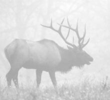 Elk in Fog by Lisa G. Putman