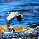 Grey bird by sparrowdk