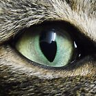 Cats Eye by Dave Storey