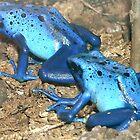 'Blue Poison' by Vincent von Frese