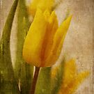 Yellow Tulips  by AnaCBStudio