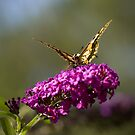 Butterfly Feeding On Tasty Flowers by Marc Garrido Clotet