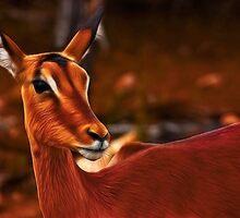 Impala Female II by Nicolas Raymond