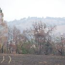 Yarra Glen - After the Fires  by lettie1957