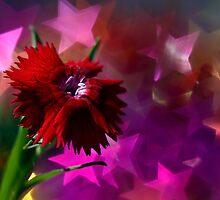 Star flower by micklyn