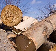 Rule of Three - Lumberjacks by valleylilie