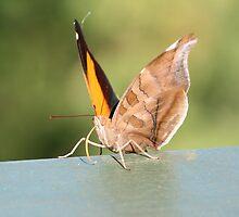 Cheeky moth by mangofantasy
