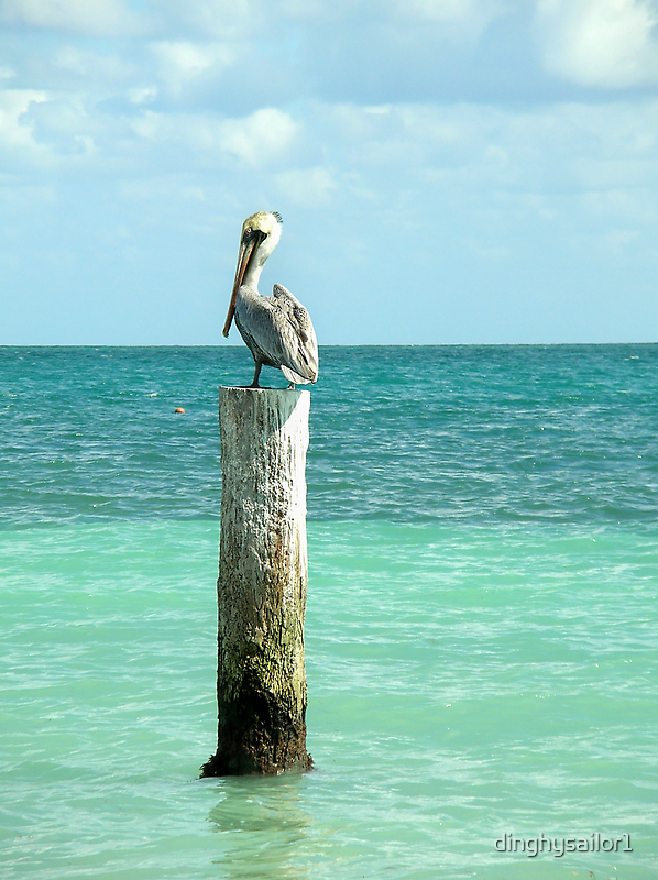 pelican post by dinghysailor1