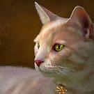 Charmed ... Tabby Cat Portrait by Renee Dawson