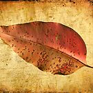 Autumn Leaf by Hans Kawitzki