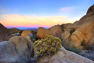 Sunset at Joshua Tree by Justin Mair