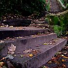 Lymm steps by Dale North Photography