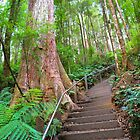 Stairway to the Treetops! by TracyD