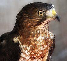 Hawk Eye by Jarede Schmetterer