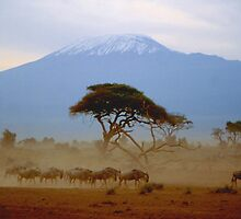Wildebeest and Kilimanjaro by Nancy Barrett
