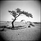 the tree at dog rocks by Roberts Birze