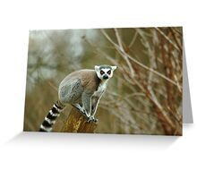 Ring Tailed Lemur Monkey Greeting Card