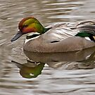 Falcated Teal at Martin Mere WWT by Steve  Liptrot