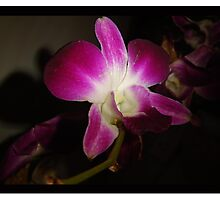 Other Orchid  Photographic Print