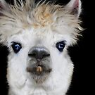 Pucker Up Baby!! by Jarede Schmetterer