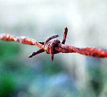 Barbed wire. by Ashton Doyle