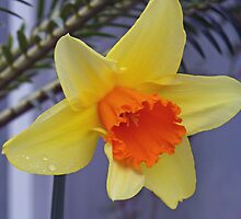 Daffodil With Fern by Dennis  Stanton