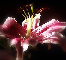 Stargazer Lilies #16 by Dawna Morton