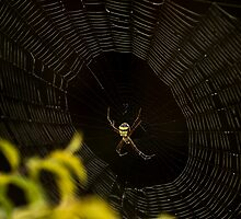The Web by Deepak Girdher