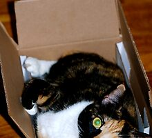My Box, My Bed. by Taylor Russell