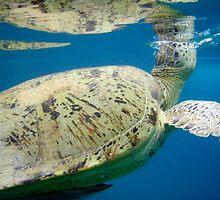 Sea Turtle by Brian Beardon