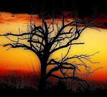 Tangled Outback Sunset © Vicki Ferrari by Vicki Ferrari