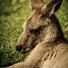 Skippy by Johnny P
