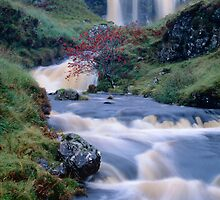 'Rowan Tree Falls' by Jon Brock