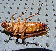 cockroach by HeatherBud