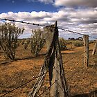 Saltbush Country by JimFilmer
