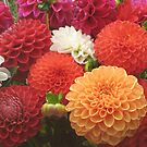 Dahlias by Trine