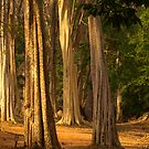 Forest near Siem Reap, Cambodia by Bev Pascoe