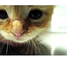 Tiny Kitty Needs A Home Photographic Print