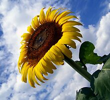 Epic Sunflower by Tracy Engle