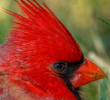Red's Eye Exam by Dennis Jones - CameraView