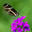 Zebra Longwing on Purple by Lisa G. Putman