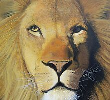 Lion by Andy  Housham
