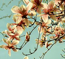 Brooklyn Spring Blossoms by GalloGirlPhotos