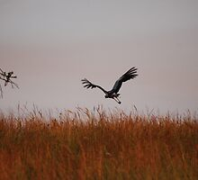 After take-off by laureenr